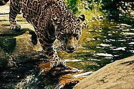 自然,景觀,動物