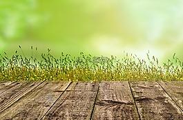 背景,綠色,園藝