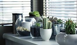 花盆,植物,仙人掌