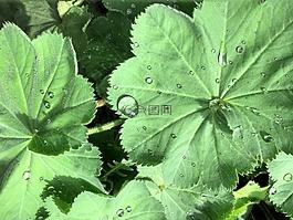 一滴水,叶子,厂