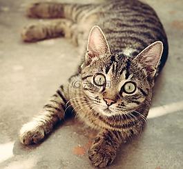 猫,动物,可爱