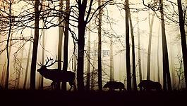 森林,霧,赫爾