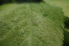 厂,叶子,一滴水