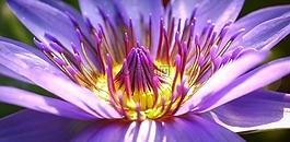 花,开花,性质
