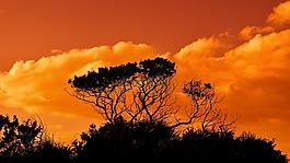 樹,分支機構,日落