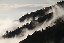 霧,森林,薄霧