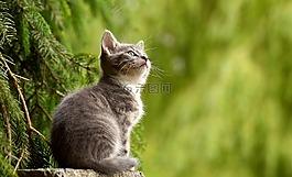 猫,年轻的动物,好奇