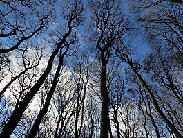 森林,天空,冬天
