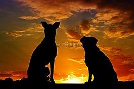狗,动物,日落