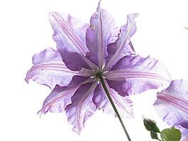 花,性质,植物群