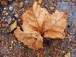 秋天,秋天的颜色,秋天树叶