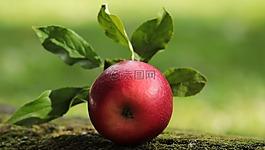 苹果,红色,红苹果
