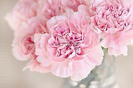 鲜花,粉红色,丁香