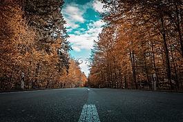 路,秋季,樹木