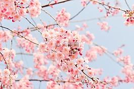 自然,植物,鲜花