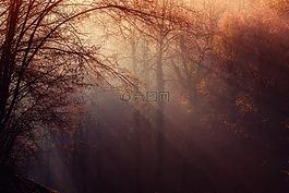 森林,气氛,光