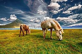 馬匹,景觀,自然