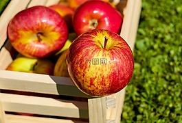 蘋果,紅色,水果