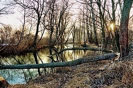 性質,樹木,冬天