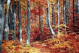 秋天,叶,季节