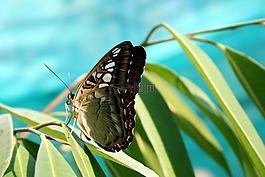 蝴蝶,性质,昆虫