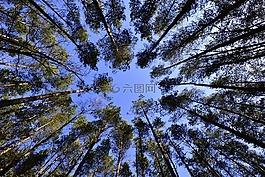 森林,天空,叶子