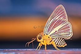 变身,蝴蝶,昆虫