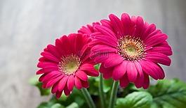 花,春天,夏季