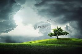 樹,鳥,土地