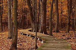 秋天,叶子,线索
