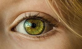 眼,绿色的眼睛,关闭了