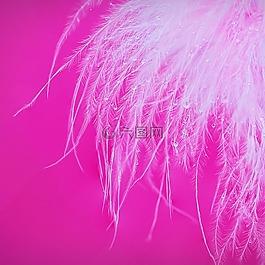 特寫,羽毛,水滴