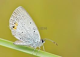 性质,昆虫,蝴蝶