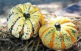 感恩节,南瓜,秋季
