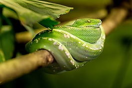 蛇,绿色,宏