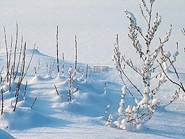 冬天,霜,雪
