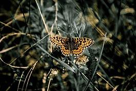 蝴蝶,性质,生活的本质