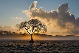 孤獨的樹,樹,橡樹