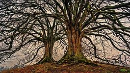 樹,性質,木