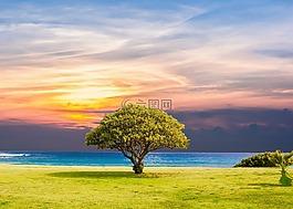 樹,海,草