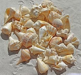 海貝殼,大海沙灘,沙