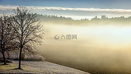 冬天,上午,霧