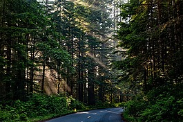 森林,樹,伍茲