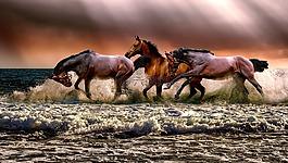 动物,马,动物区系