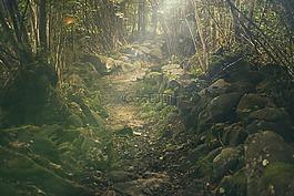 森林,路徑,神秘