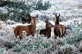 鹿,动物,自然