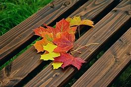 秋天的落叶,枫叶,秋天的颜色