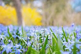 春天的花朵,国家,自然