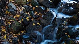 大瀑布,叶子,水