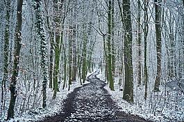 森林,樹木,雪